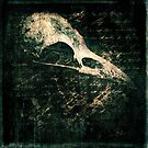 Flightless by David Atkinson