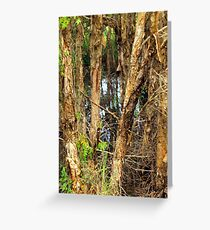 Paper Bark Trees (Melaleuca quinquenervia) Greeting Card