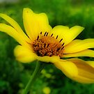 I've Got Sunshine, On A Cloudy Day by shutterbug2010