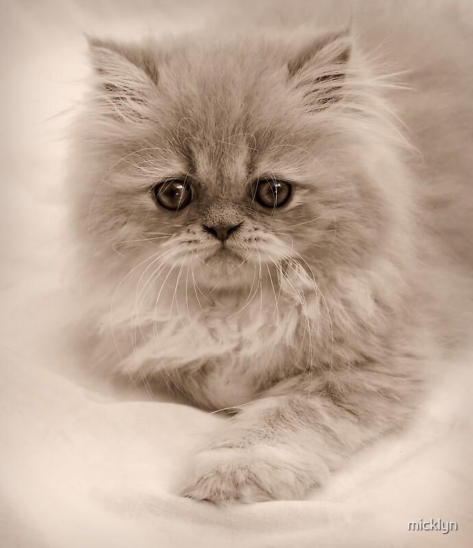 Кот скучает открытка