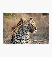 Leopard portrait - Djuma Game Reserve Photographic Print