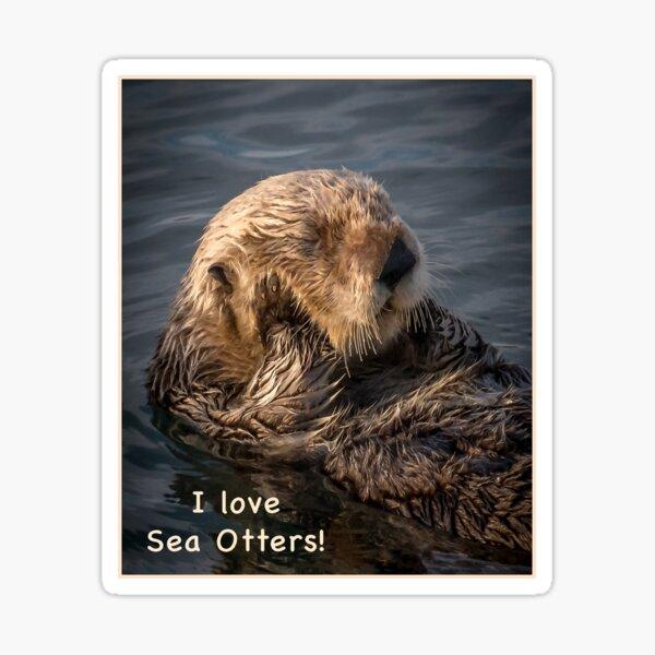 Sleepy Sea Otter! Sticker