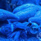 Blue on Blue by Sandra Fortier
