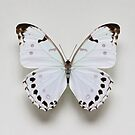 White Morpho Butterfly by Alyson Fennell