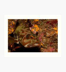 Grouper, Guanacaste, Costa Rica, 2006 Art Print