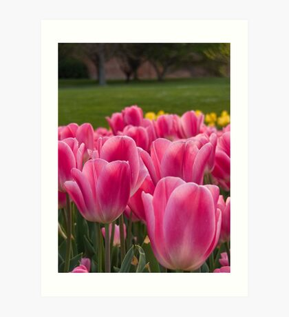 Hobart in Spring Art Print