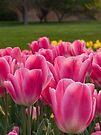 Hobart in Spring by BRogers