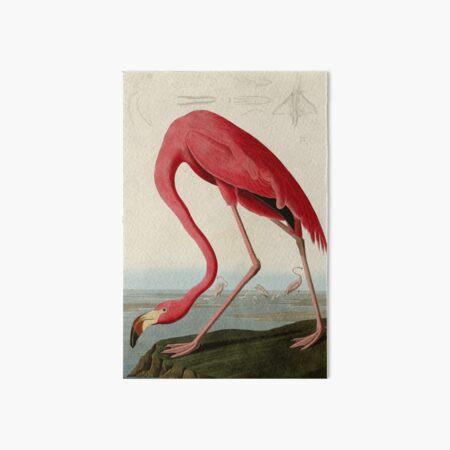 American Flamingo by John James Audubon, Vintage Illustration Art Board Print