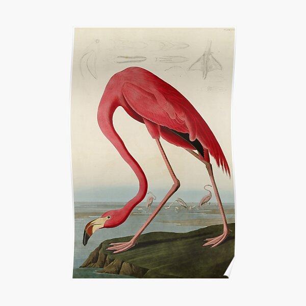 American Flamingo by John James Audubon, Vintage Illustration Poster