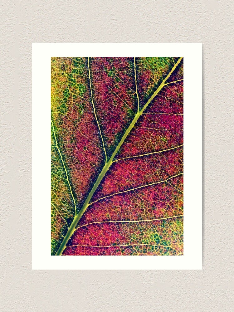 Alternate view of Leaf structure Art Print
