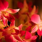Orchids by Candlelight by Tracy Riddell