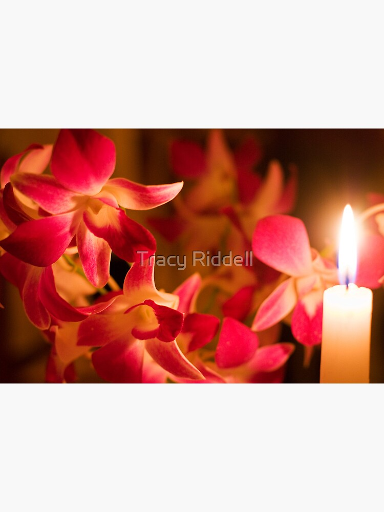 Orchids by Candlelight by taos