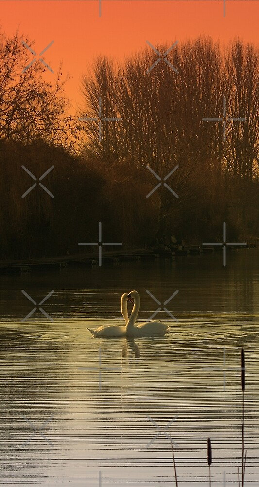 Love Birds by Avril Harris