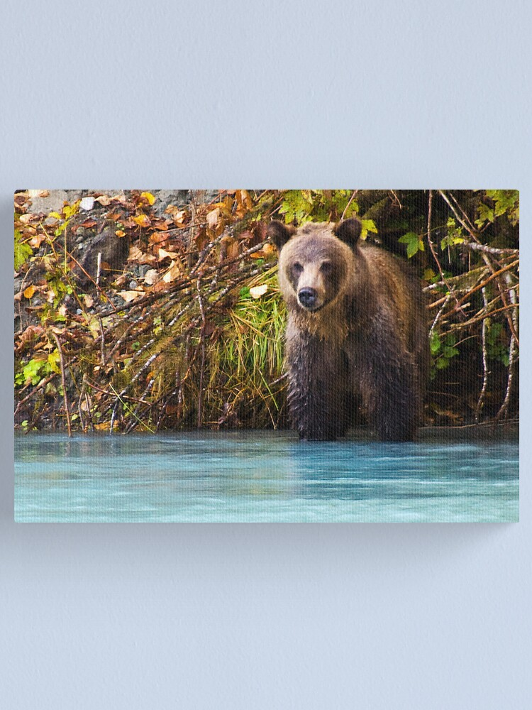 Alternate view of Grizzly Bear Canvas Print