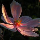 Una flor ........ by cieloverde