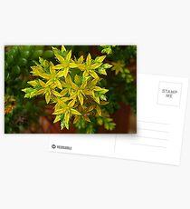 Florecillas amarillas..... Postcards