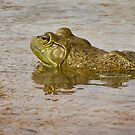 Bullfrog in Texas by Kim Barton