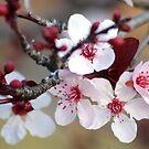 My Spring greeting 2012 by loiteke