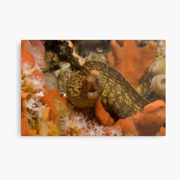 Sieve-Patterned Moray Metal Print