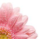 Pretty In Pink by Lynne Morris