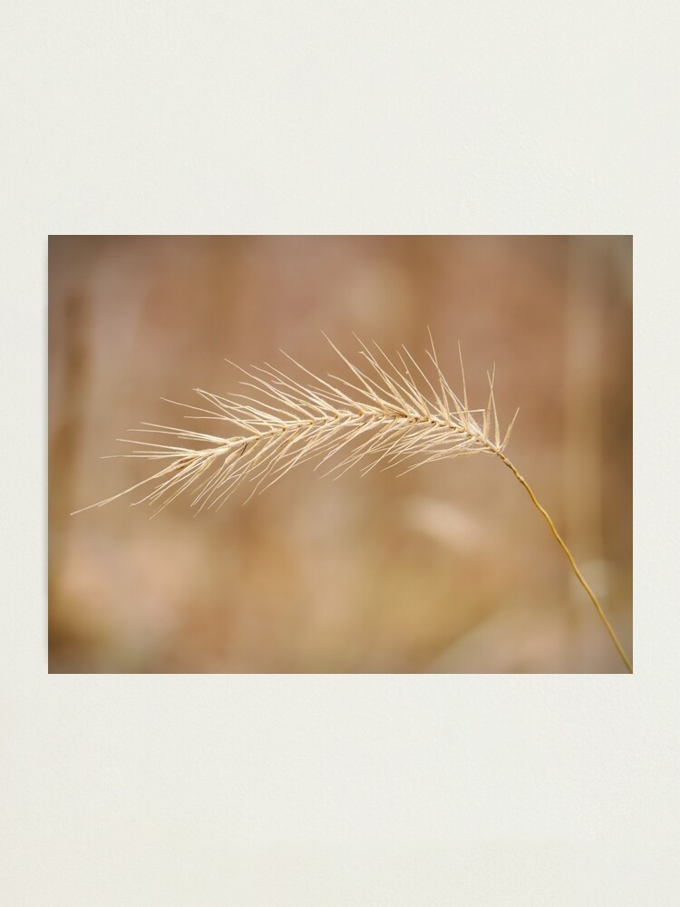 Alternate view of Grass Seed Photographic Print