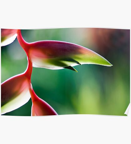Tropicana - Sexy Pink Flower Poster