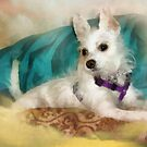 Miss Maggie May - 5 Mos. Old by Rhonda Strickland