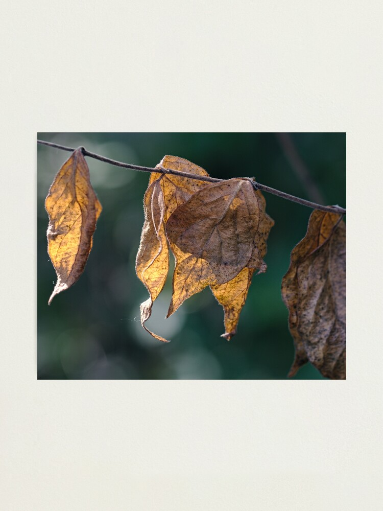 Alternate view of Remains of Autumn Photographic Print