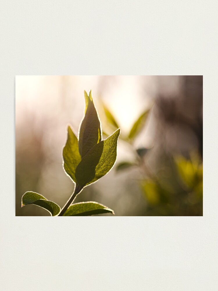 Alternate view of Soft Morning Light Photographic Print