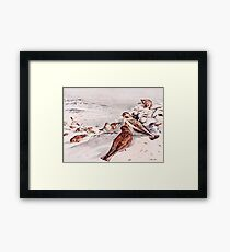 Winter Scene with Snow Buntings Framed Print