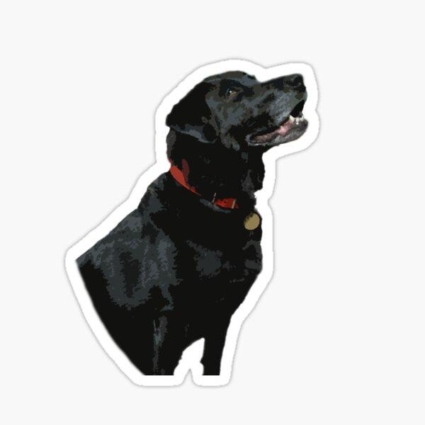 Adoration from a Black Labrador dog Sticker