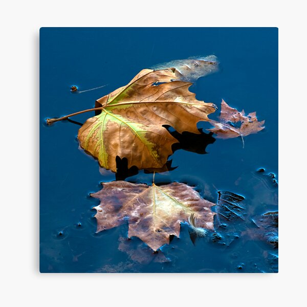 Floaters Canvas Print
