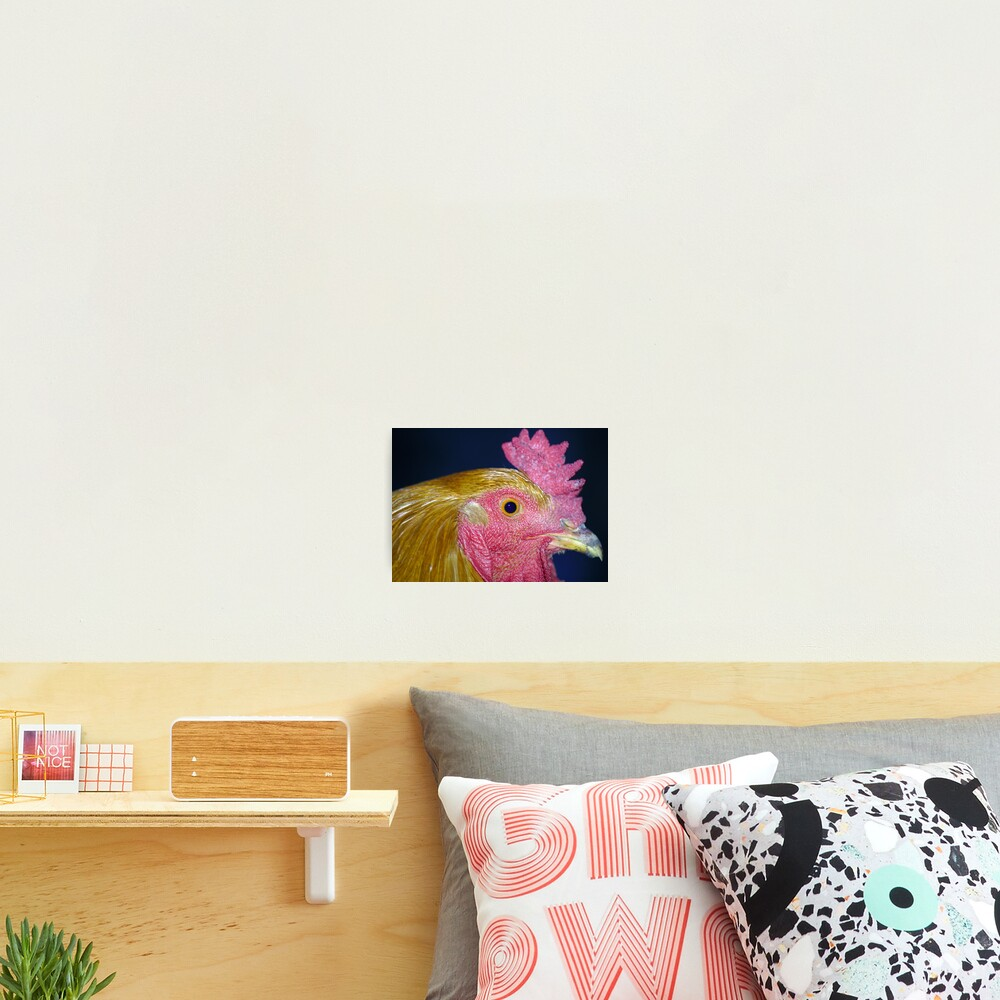 Portrait of a Chicken Photographic Print
