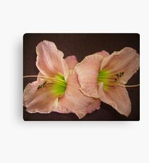 Two Peach Daylilies. Canvas Print