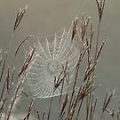 Spiderweb Covered in Dew by Declan Lopez