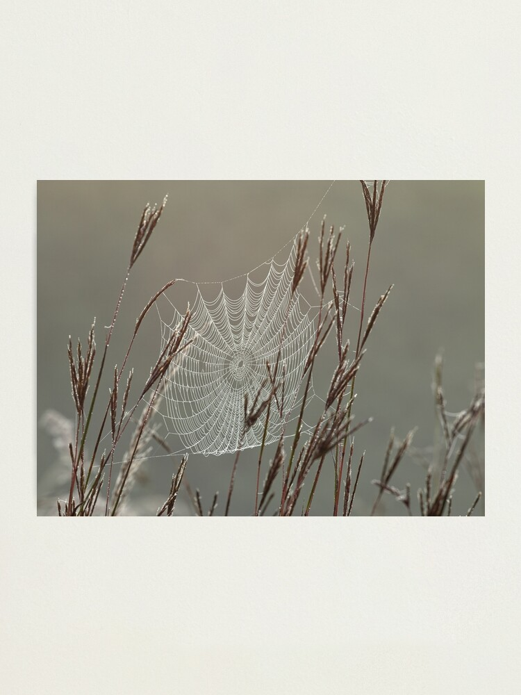 Alternate view of Spiderweb Covered in Dew Photographic Print