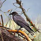 Raven by Allan  Erickson