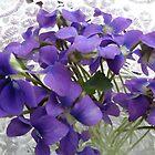 Violets by Ana Belaj