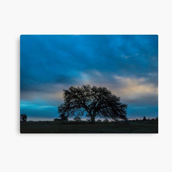 Beautiful Heritage Oak with Big Skies Canvas Print