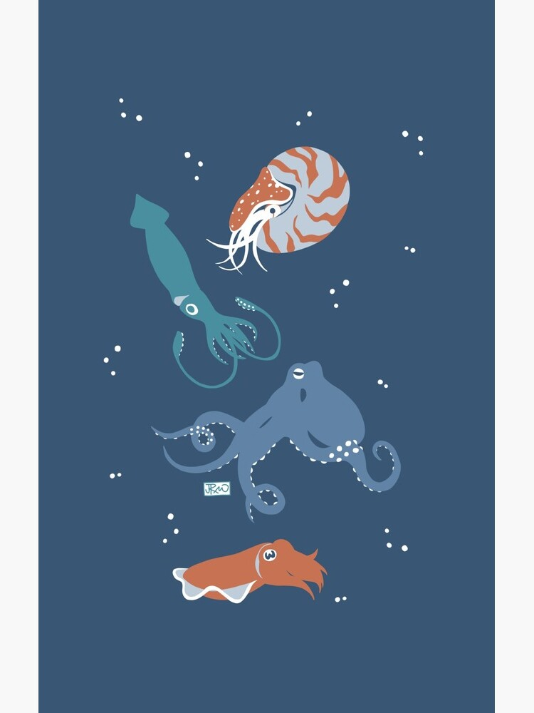 Cephalopods! by jenrichards