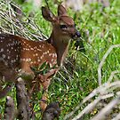 Fawn by Karen  Moore