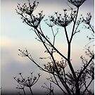 Fennel silhouette by chihuahuashower