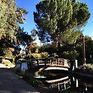UC Davis Arboretum by omhafez