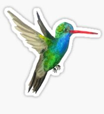 Broad-billed Hummingbird Watercolor Painting Sticker