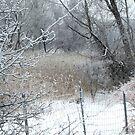 Frost, Snow & Rain by Sandra Fortier