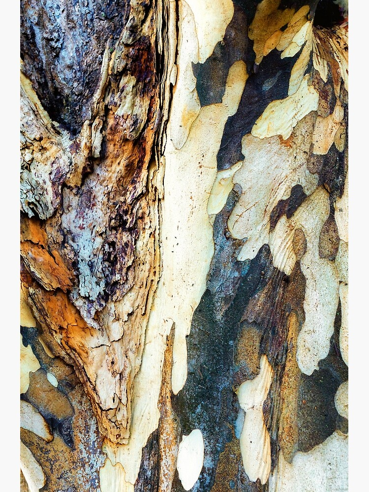 Tree trunk by fardad