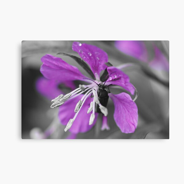 A touch of colour Canvas Print