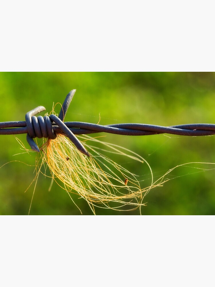 Barbed wire by fardad