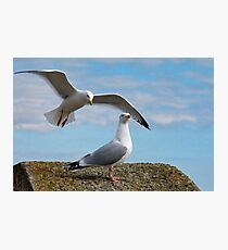 Do You Hear Wings Flapping? Photographic Print