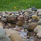 Bird Bath by klziegler